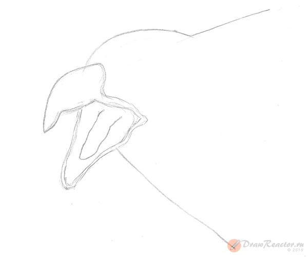 Как нарисовать орла. Шаг 2.