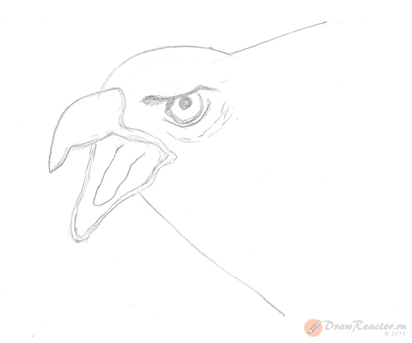 Как нарисовать орла. Шаг 3.