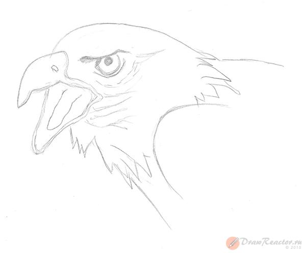 Как нарисовать орла. Шаг 4.
