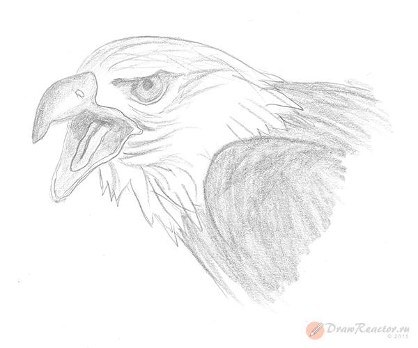 Как нарисовать орла. Шаг 5.