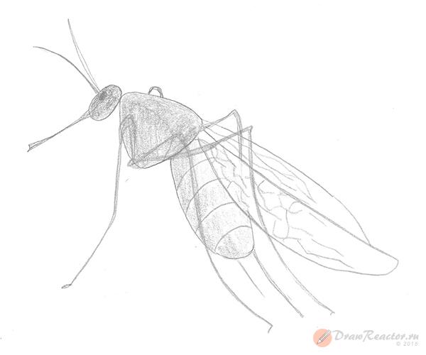 Как нарисовать комара. Шаг 5.