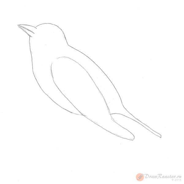 Как нарисовать чижа. Шаг 3.