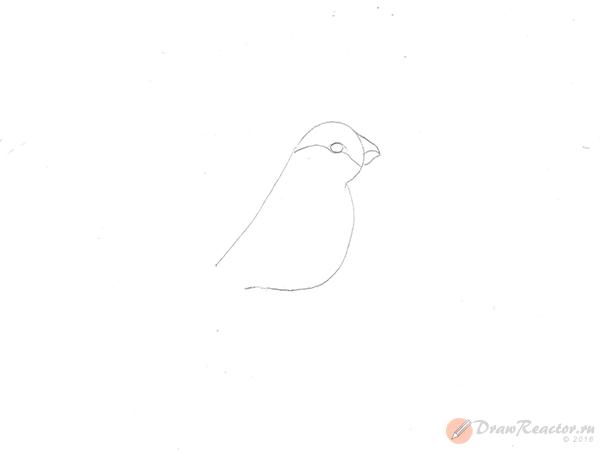 Как нарисовать снегиря. Шаг 2.