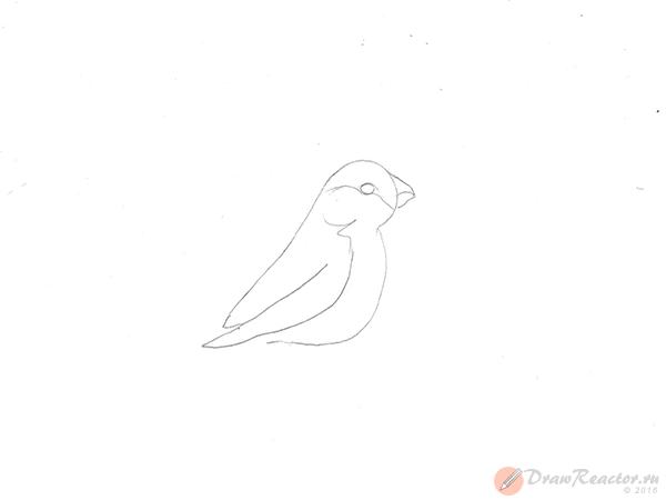 Как нарисовать снегиря. Шаг 3.