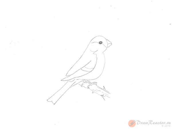 Как нарисовать снегиря. Шаг 4.