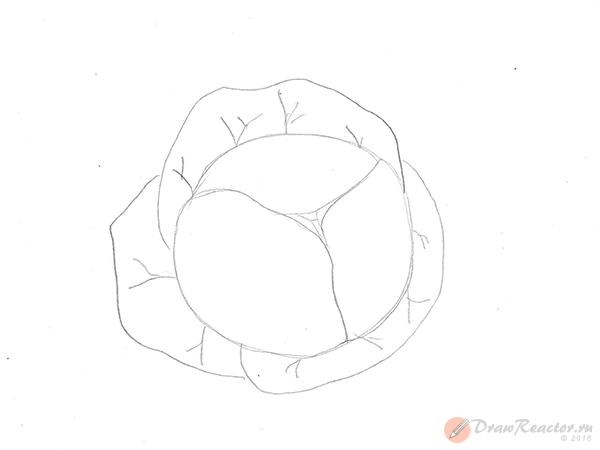 Как рисовать капусту. Шаг 3.