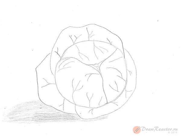 Как рисовать капусту. Шаг 4.