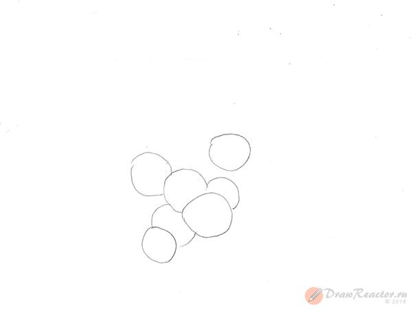 Рисунок винограда. Шаг 1.