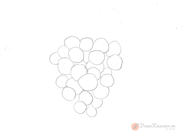 Рисунок винограда. Шаг 2.