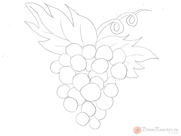Рисунок винограда. Шаг 3.