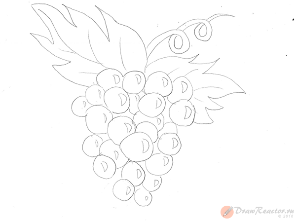 Рисунок винограда. Шаг 4.