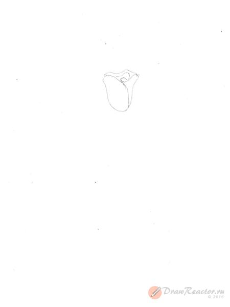 Как нарисовать розу. Шаг 1.