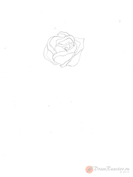 Как нарисовать розу. Шаг 3.