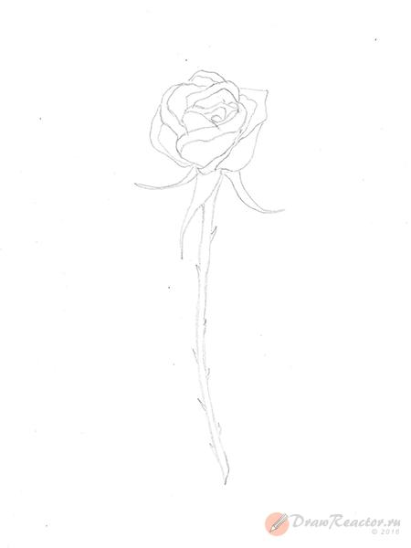 Как нарисовать розу. Шаг 4.