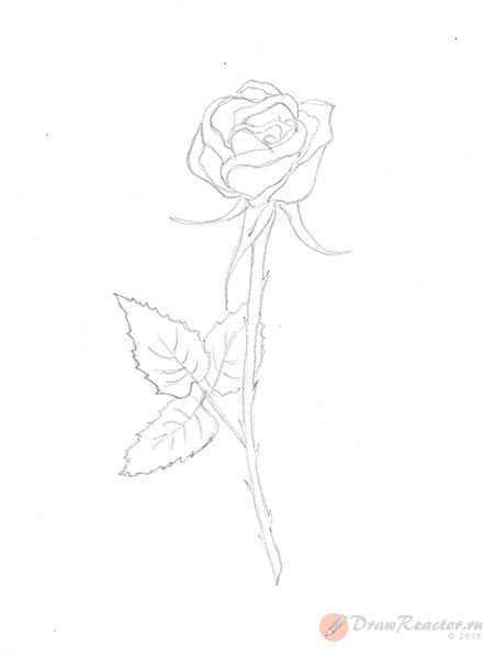 Как нарисовать розу. Шаг 5.