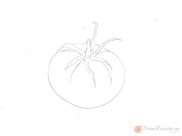 Как нарисовать помидор. Шаг 4.