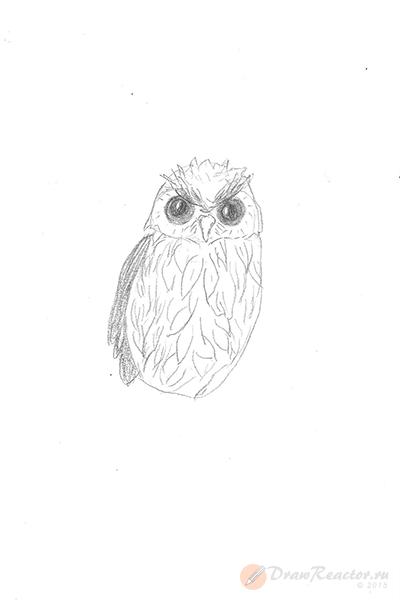 Рисунок совы. Шаг 4.