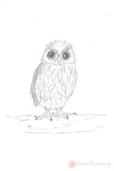 Рисунок совы. Шаг 5.