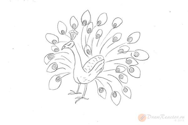 Как нарисовать павлина. Шаг 5.