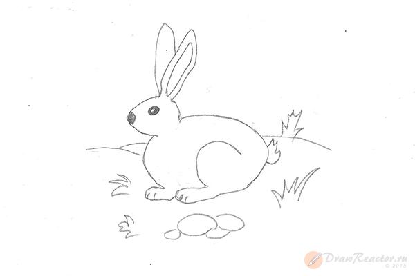 Как нарисовать кролика. Шаг 5.