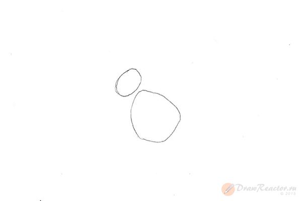Как рисовать белку. Шаг 1.