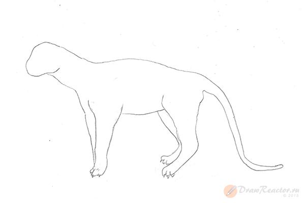 Рисунок тигра. Шаг 4.