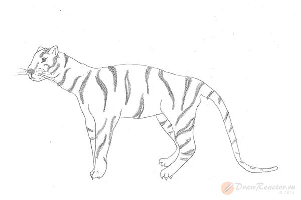 Рисунок тигра. Шаг 5.