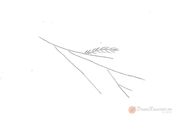 Как нарисовать ветку ели. Шаг 2.