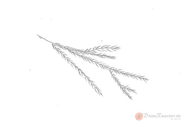 Как нарисовать ветку ели. Шаг 3.