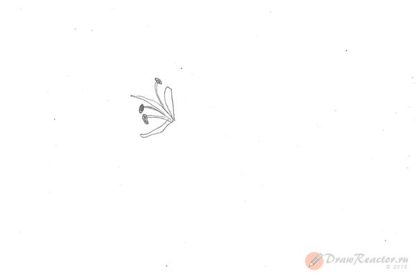 Рисунок лилии. Шаг 1.