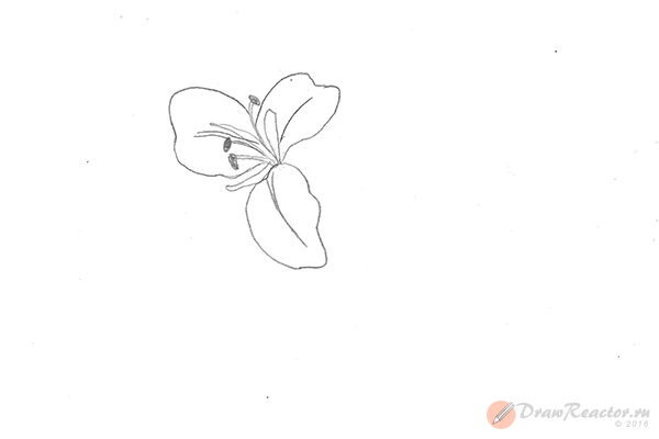 Рисунок лилии. Шаг 3.