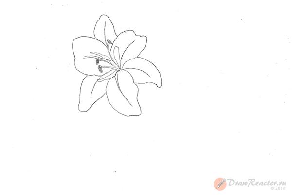 Рисунок лилии. Шаг 4.
