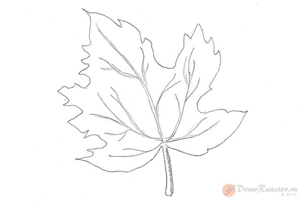 Как нарисовать кленовый лист. Шаг 5.