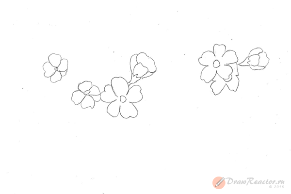 Рисунок сакуры. Шаг 3.