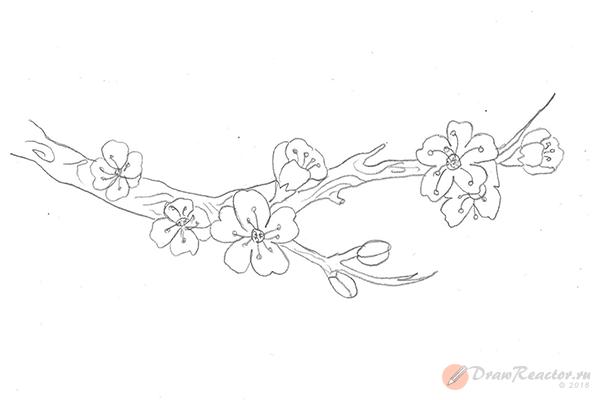 Рисунок сакуры. Шаг 5.